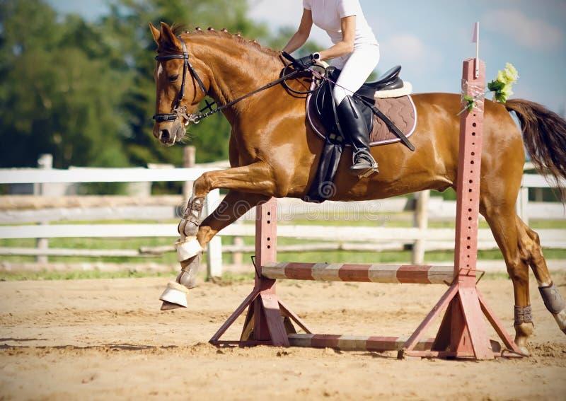 Ein Kastanienpferd mit einem Reiter macht einen Sprung über einer Sperre stockbilder