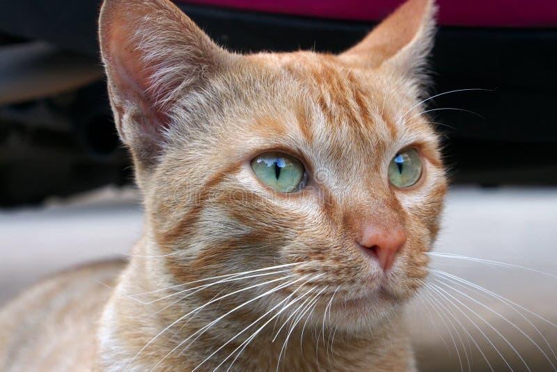 Ein Katzengesicht lizenzfreie stockbilder