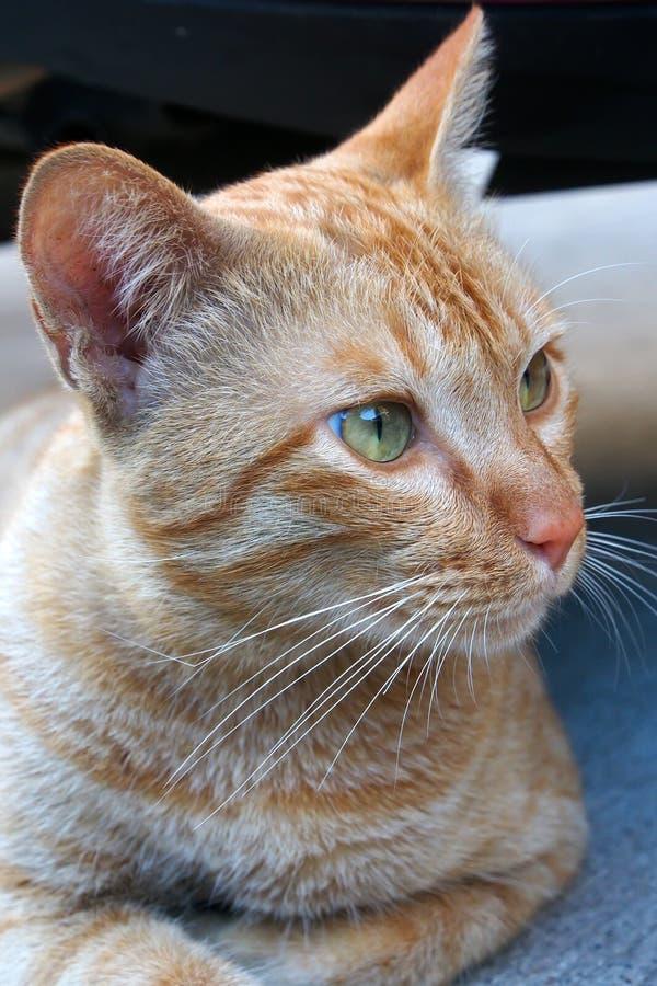 Ein Katzengesicht stockfoto