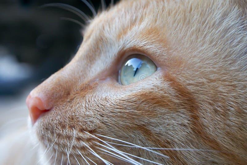 Ein Katzengesicht lizenzfreie stockfotografie