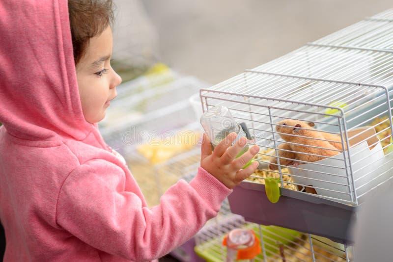 Ein Kinderernährungshamster ein Wasser Kleinkindkinderjunges Mädchen, das mit Haustierhamster spielt lizenzfreies stockfoto