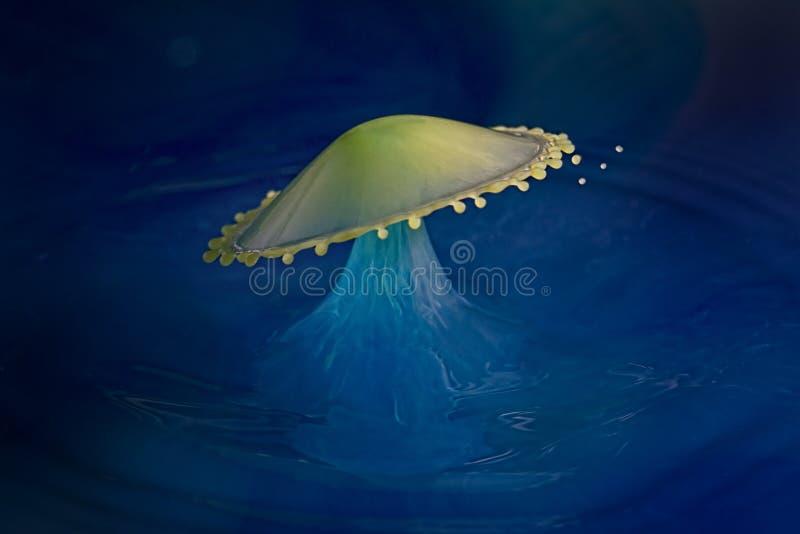 Ein klassischer Wasser-Tropfen-Zusammenstoß, der einen Regenschirm bildet lizenzfreies stockfoto