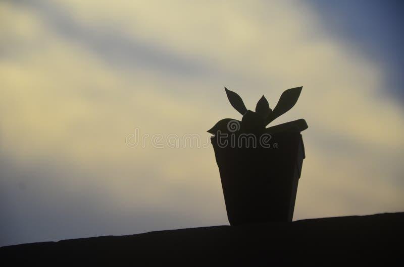 Ein kleiner Baum im Schatten lizenzfreies stockbild