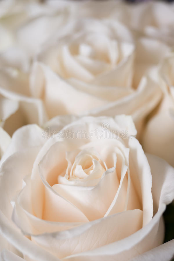 Ein kleiner Blumenstrauß von hellrosa Rosen stockfotos