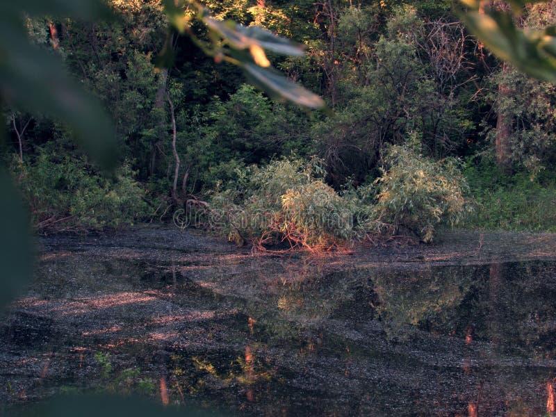 Ein kleiner dunkler dunkler mysteriöser feenhafter Waldsee mit Schlamm- und Leuchtorangeorangenbaumwurzeln lizenzfreie stockbilder