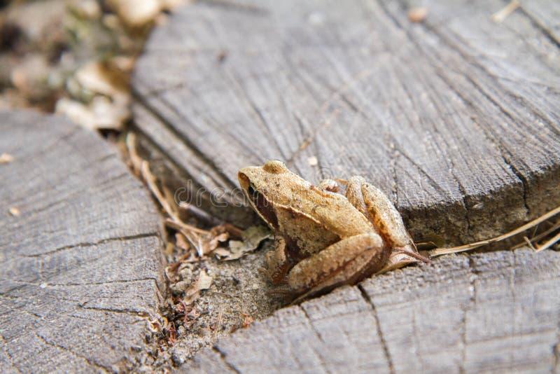 Ein kleiner Frosch stockfotos