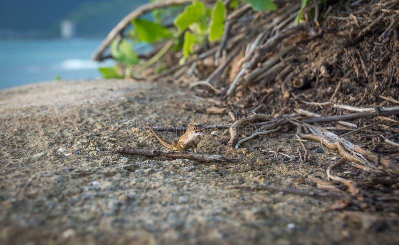 Ein kleiner Gecko mit einem großen Lächeln lizenzfreies stockfoto