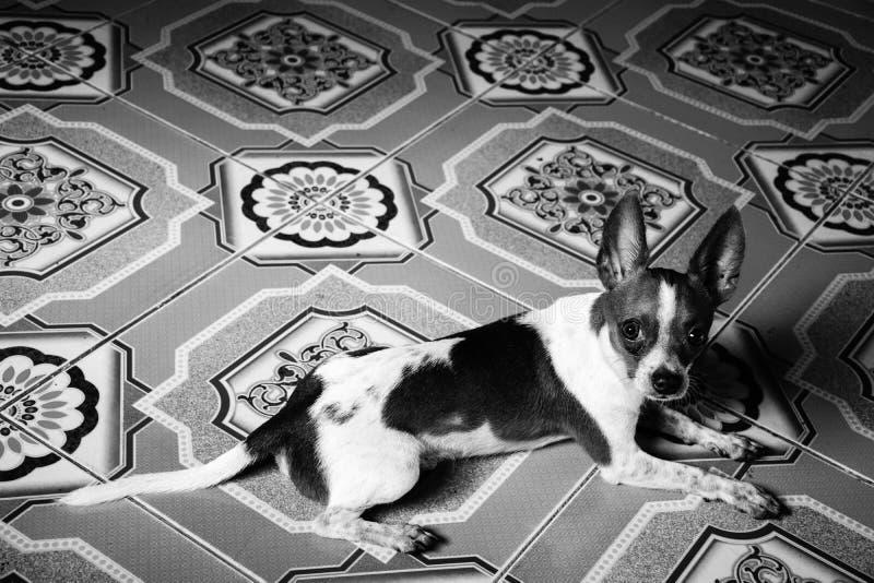 Ein kleiner Hund stockfoto