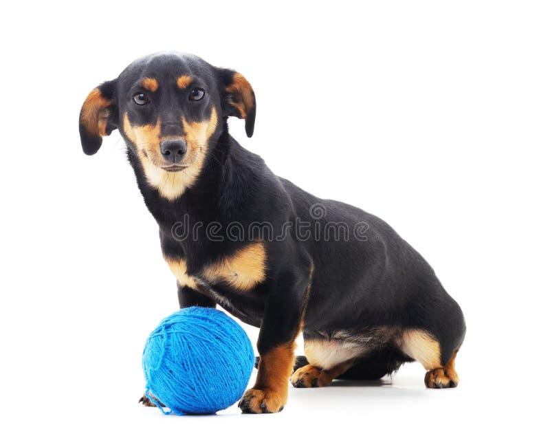 Ein kleiner Hund mit Kugeln stockbild