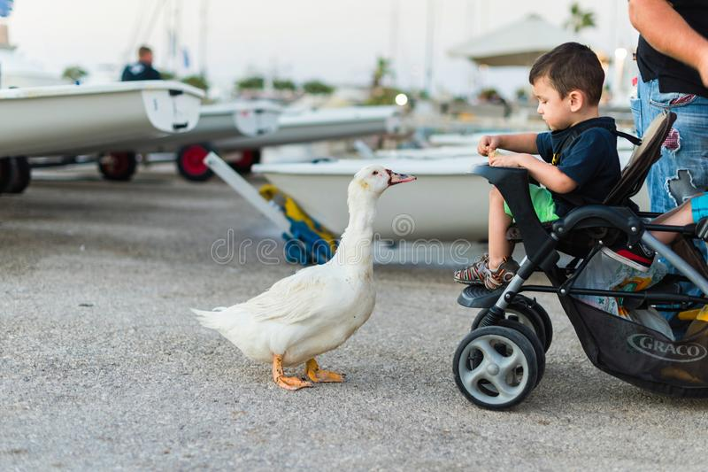 Ein kleiner Junge in einem Kinderwagen, der eine Gans mit Brot an der Dämmerung im Hafen einzieht stockbilder