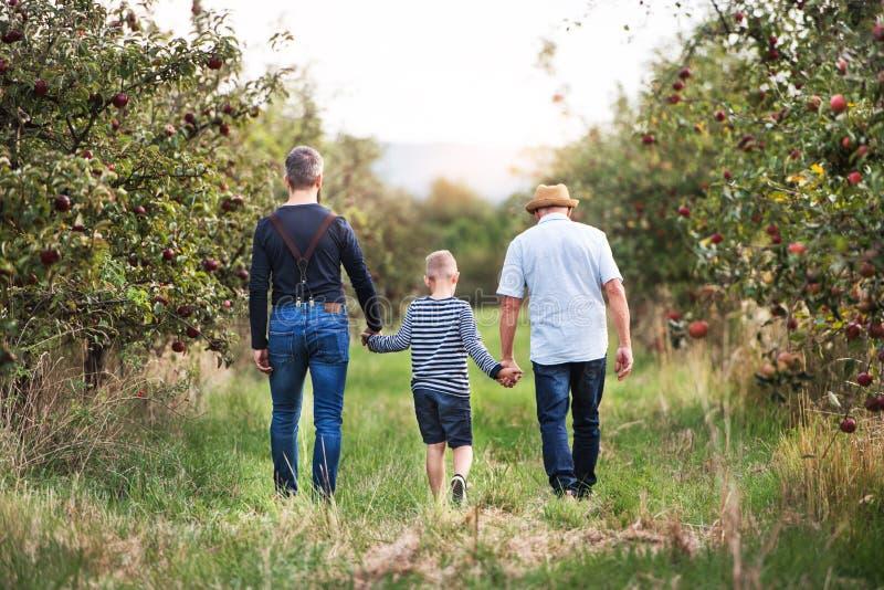Ein kleiner Junge mit dem Vater und Großvater, die in Apfelgarten im Herbst gehen lizenzfreies stockbild