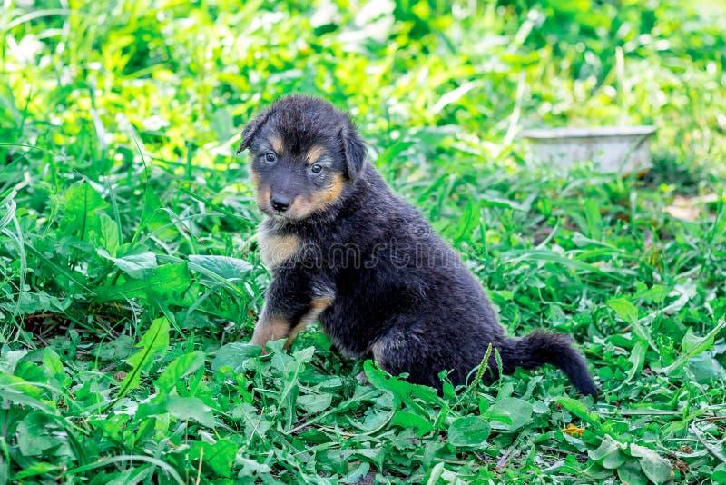 Ein kleiner schwarzer Welpe sitzt auf dem Gras nahe bei einer Platte von food_ stockfoto