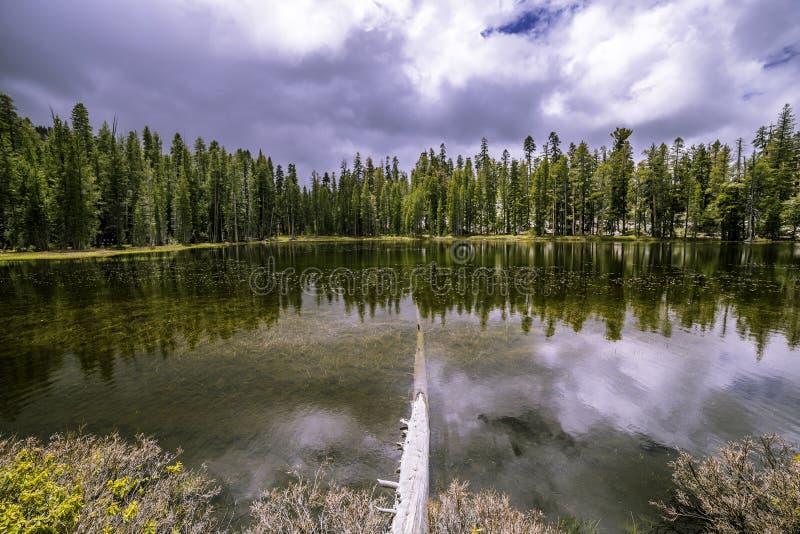 Ein kleiner See entlang der Tioga-Straße stockbilder