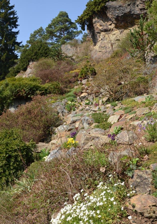 Ein kleiner Steingarten stockbild. Bild von trocken, europa - 52546825