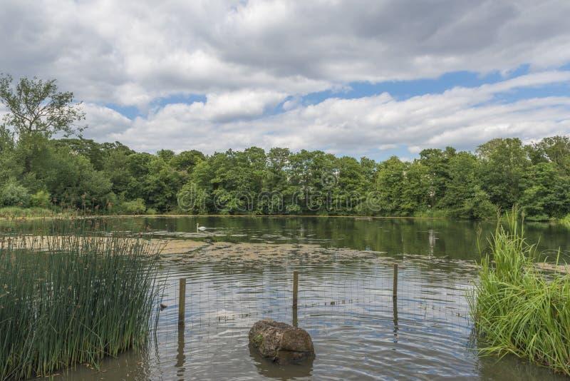 Ein kleiner Teich in Hampstead-Heide, London, Großbritannien lizenzfreie stockfotos