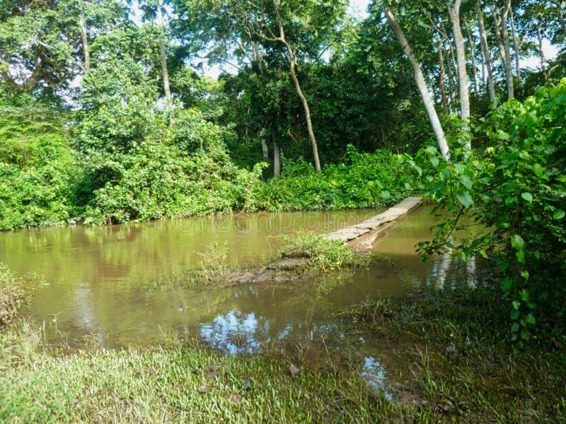 ein kleiner Teich mit einem Steg lizenzfreie stockfotos