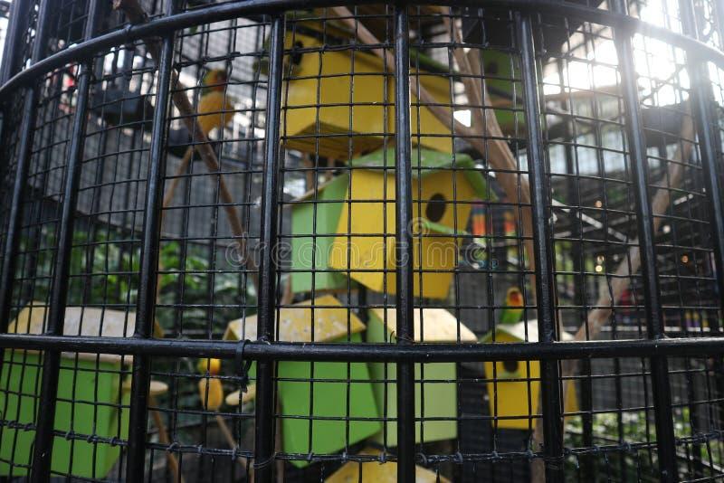 Ein kleiner Vogel in einem Käfig stockfoto