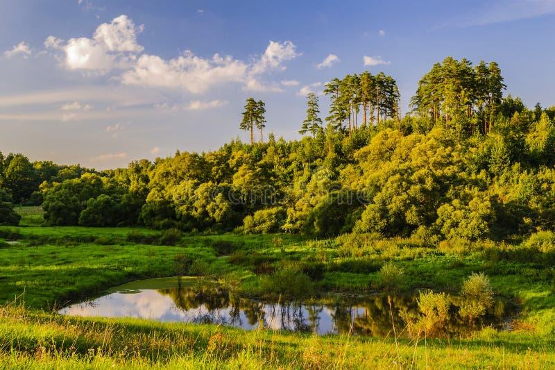 Ein kleiner Waldseebusch und hohen Kiefer am Ende eines Sommertages in den Strahlen der untergehenden Sonne stockfoto