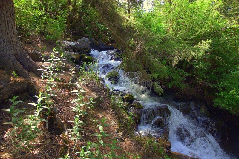 Ein kleiner Wasserfall, der unten von den Bergen überwältigt mit Wäldern fließt Altai, Sibirien, Russland landschaft stockbilder