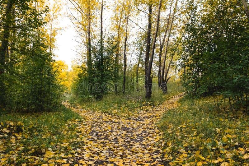 Ein kleines, bedeckt mit gefallenen Blättern, der Weg wird in TW unterteilt stockfoto