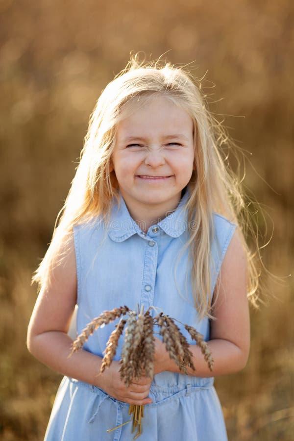 Ein kleines blondes Mädchen steht im Sommer auf Weizenfeldern mit Spikelets in den Händen stockbilder