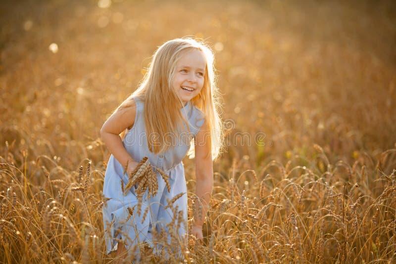 Ein kleines blondes Mädchen steht im Sommer auf Weizenfeldern mit Spikelets in den Händen lizenzfreies stockfoto