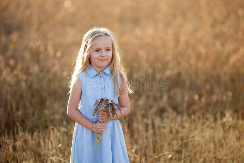 Ein kleines blondes Mädchen steht im Sommer auf Weizenfeldern mit Spikelets in den Händen stockbild