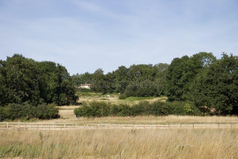 Ein kleines Haus in einem Grasland lizenzfreies stockbild