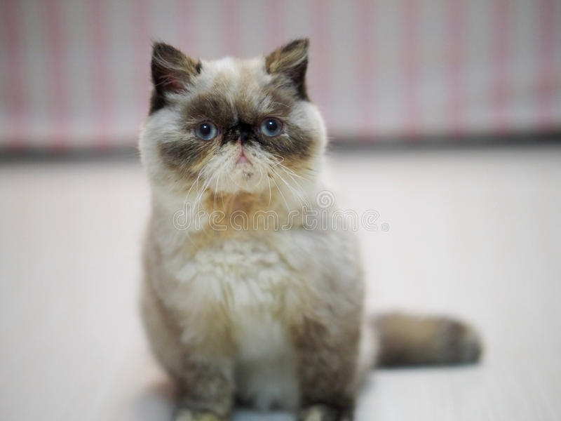 Ein kleines Kätzchen, das auf Boden sitzt lizenzfreie stockfotografie