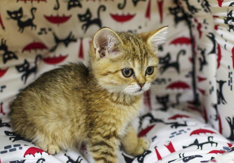 Ein kleines Kätzchen in einem Haustierspeicher lizenzfreies stockbild
