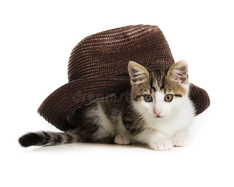 Ein kleines Kätzchen unter einem braunen Hut lizenzfreie stockfotografie