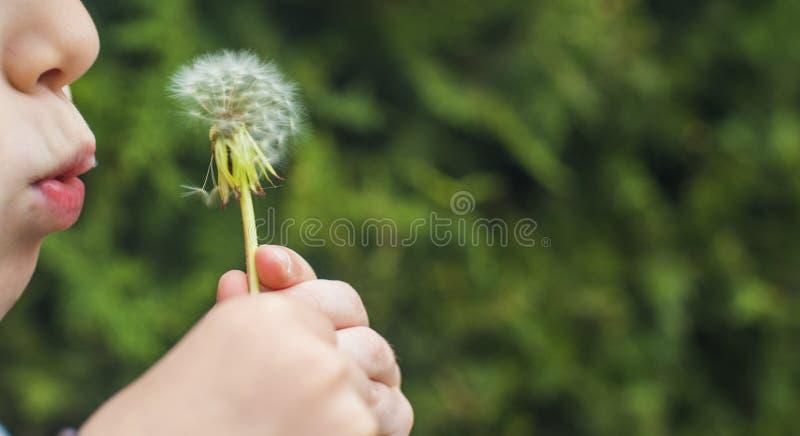 Ein kleines Kind brennt weg einen flaumigen L?wenzahn durch lizenzfreie stockfotografie