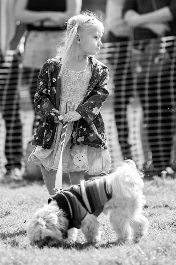 Ein kleines Mädchen, das ihren Hund im Park an einer Hundeshow geht stockbild