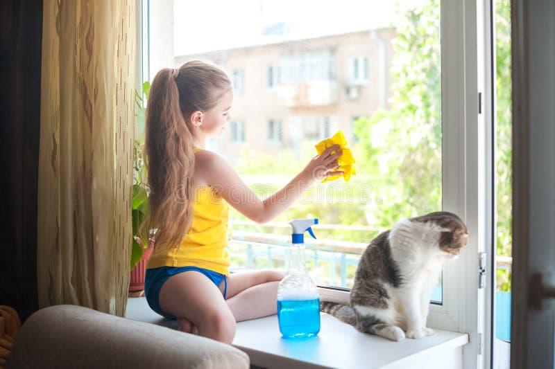 Ein kleines Mädchen mit einer Katze auf dem Fensterbrett wäscht die Fenster Fokus auf der britischen Katze stockfotografie