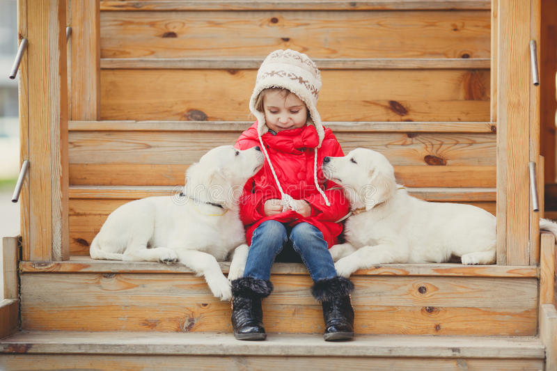 Ein kleines Mädchen mit zwei Welpe golden retriever stockbild