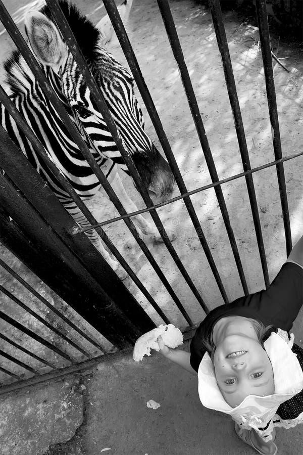Ein kleines Mädchen und ein Zebra zoo lizenzfreies stockbild