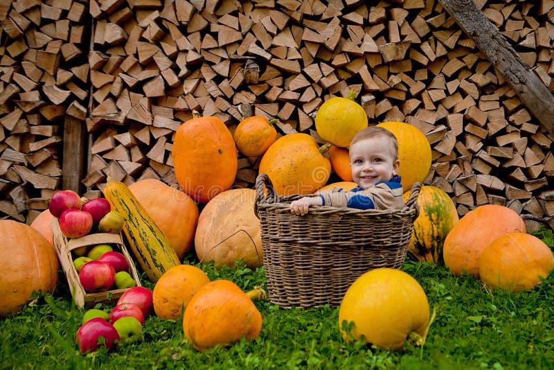 Ein kleines nettes Baby sitzt in einem hölzernen Korb mit Halloween-Fallkürbisen um das Kind für eine Saisonporträtmitteilung als lizenzfreie stockfotos