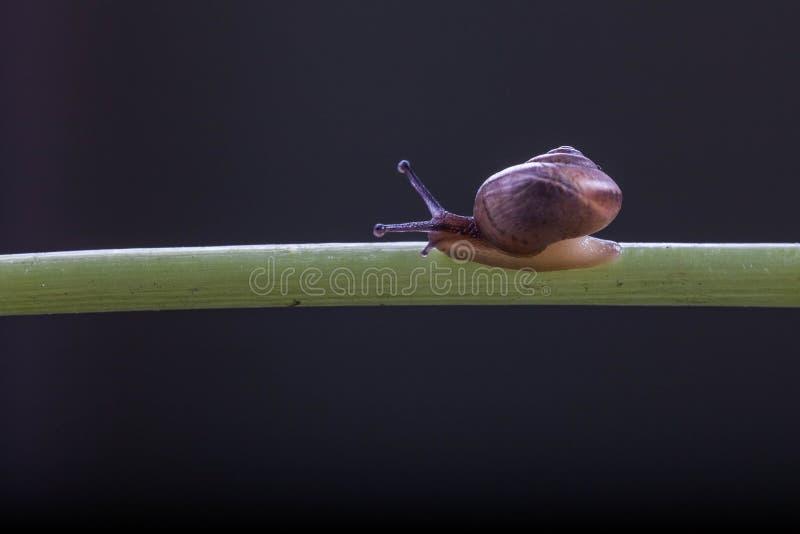 Ein kleines Schneckenkriechen stockfotos