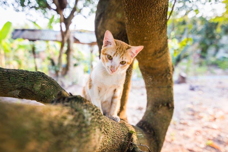 Ein kletternder Stamm der kleinen weißen Katze, spielend auf einem Baum mit einem schönen bokeh Licht und betrachten ein Kind, da lizenzfreies stockbild