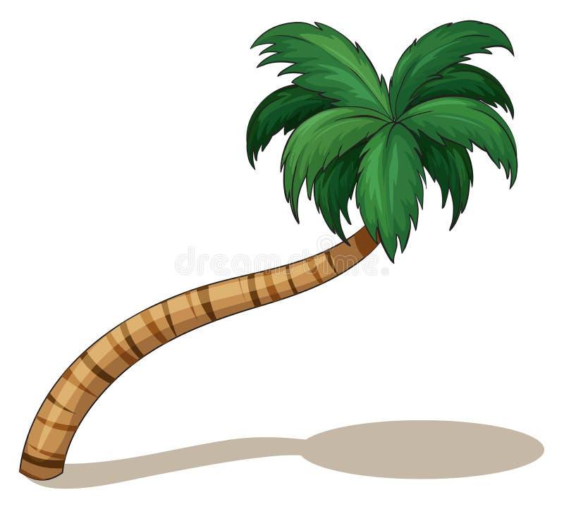 Ein Kokosnussbaum lizenzfreie abbildung