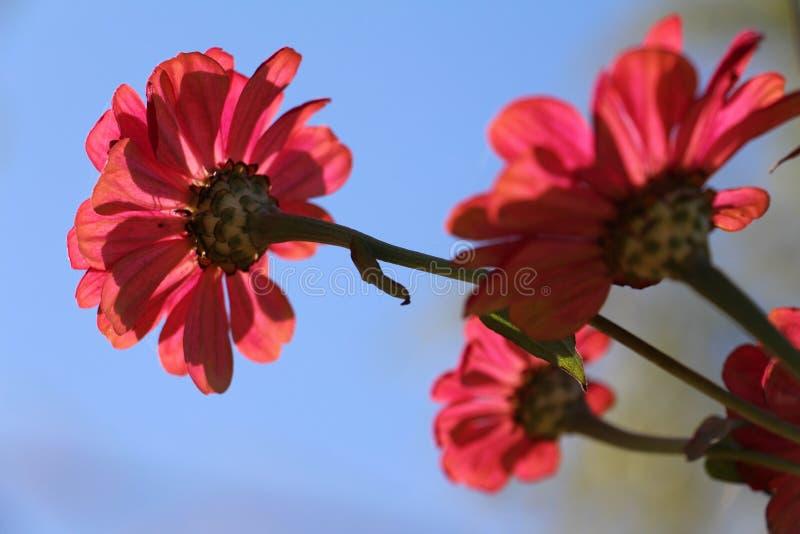 Ein Kranz von roten Blumen stockfoto