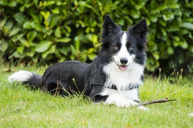 Ein lächelnder Hund lizenzfreie stockbilder