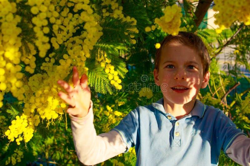 Ein lächelnder Junge, der mit gelben Bällen des Mimosenbaums spielt Süd-Frankreich-Feiertage Frühling kommt Frühblüten stockfotos