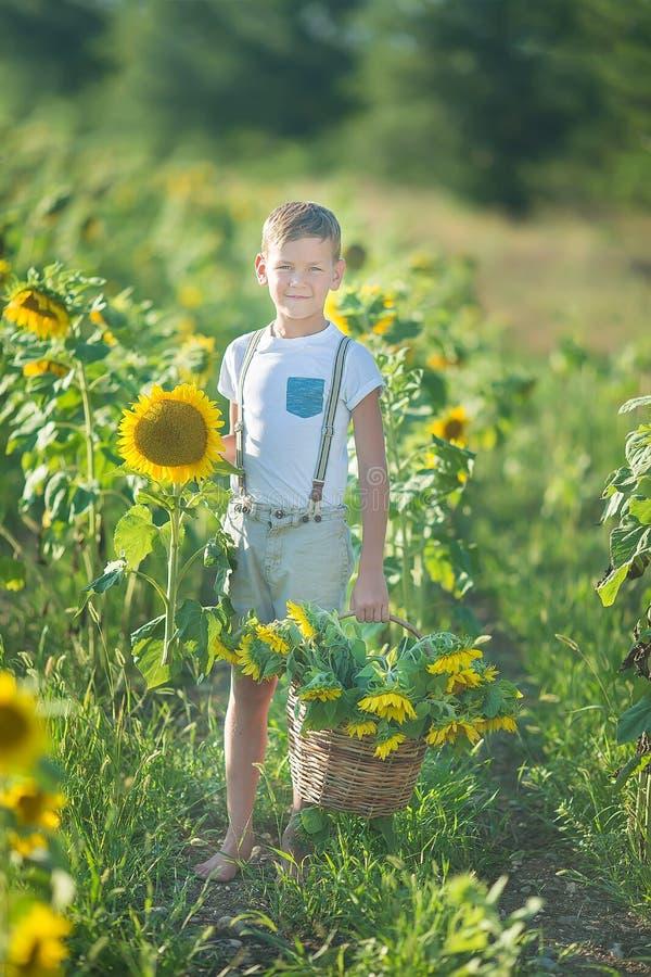 Ein lächelnder Junge mit einem Korb von Sonnenblumen Lächelnder Junge mit Sonnenblume Ein netter lächelnder Junge auf einem Gebie stockbild