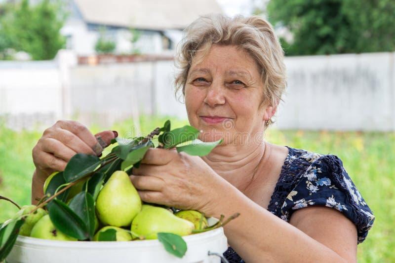 Ein Landwirt mit einer Birnenernte lizenzfreie stockbilder