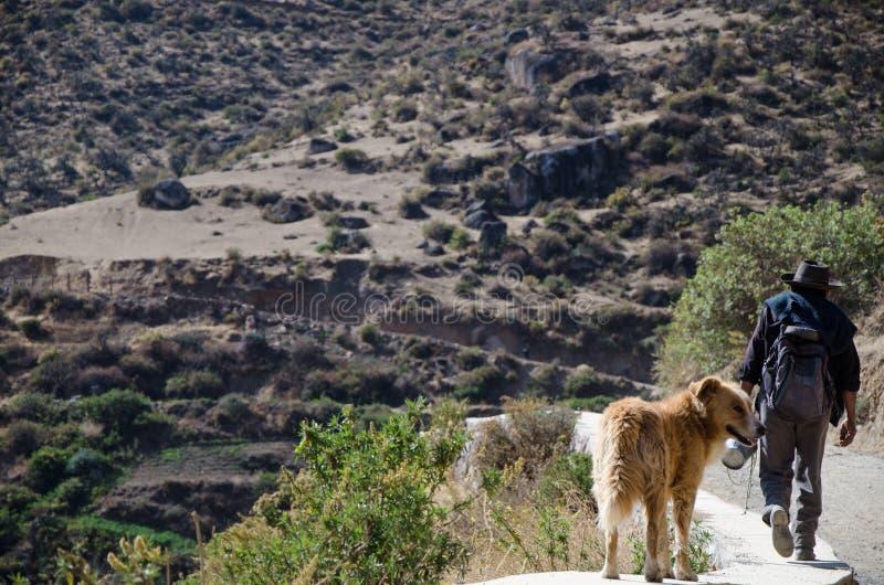 Ein Landwirt und sein Hund, die am Rand einer Straße gehen stockfoto