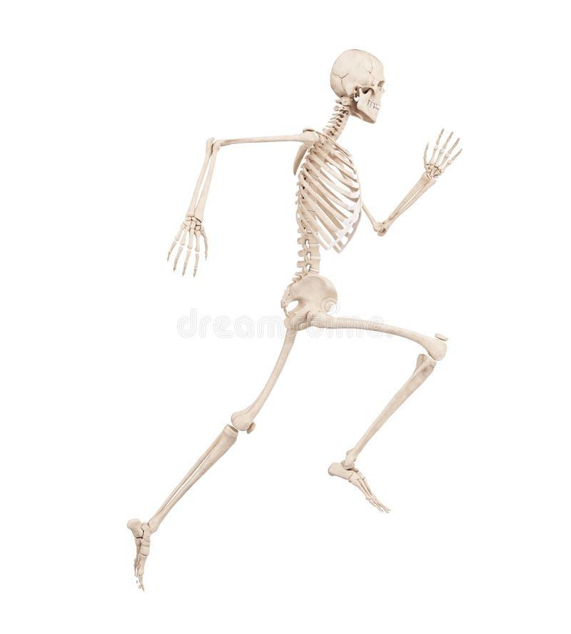 Ein laufendes Skelett stock abbildung