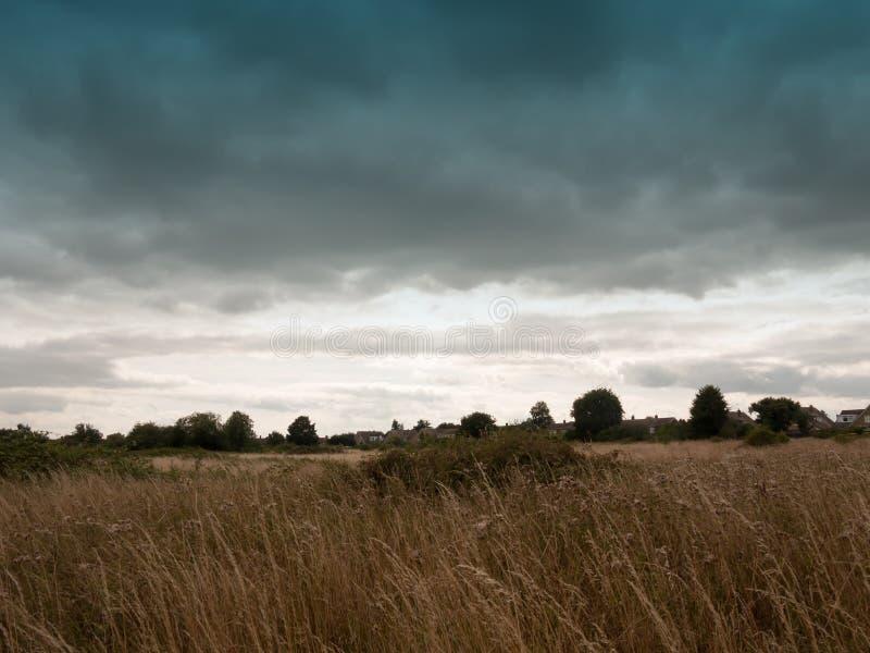 Download Ein Leeres Hinteres Feldlos Mit REEDgras Und -himmel Stockbild - Bild von cloudscape, gras: 96931013