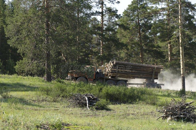 Ein LKW im Wald transportiert die geschnittenen Bäume Großer Transport geladen mit Kiefer Holztransporte stockbild