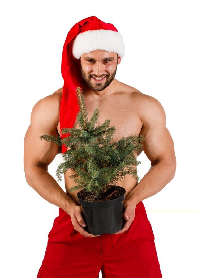 Ein lokalisierte den kaukasischen starken jungen Kerl, der als Santa Claus mit Weihnachtsbaum in seiner Hand gekleidet wurde stockfotografie